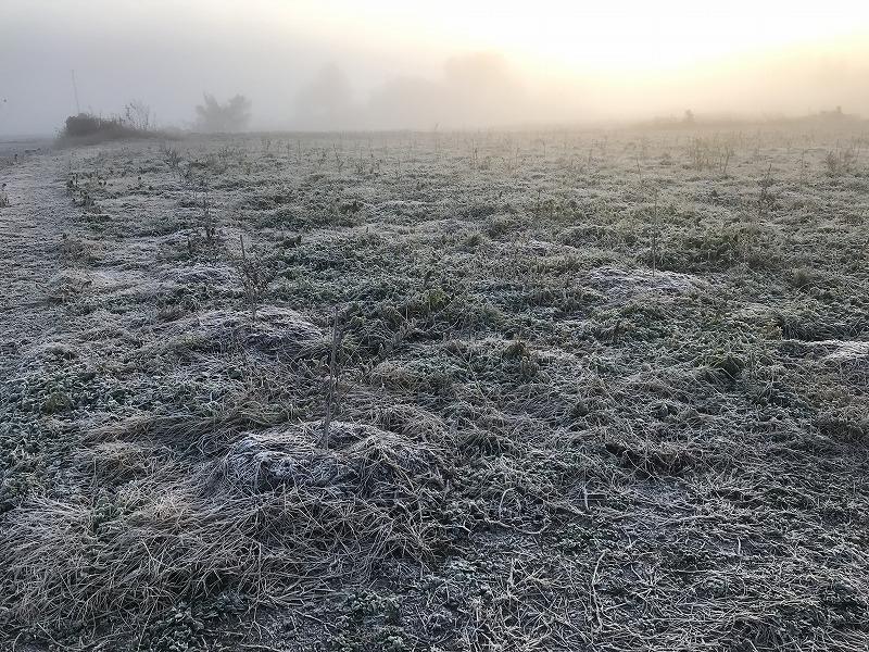 霜の中のブルーベリー