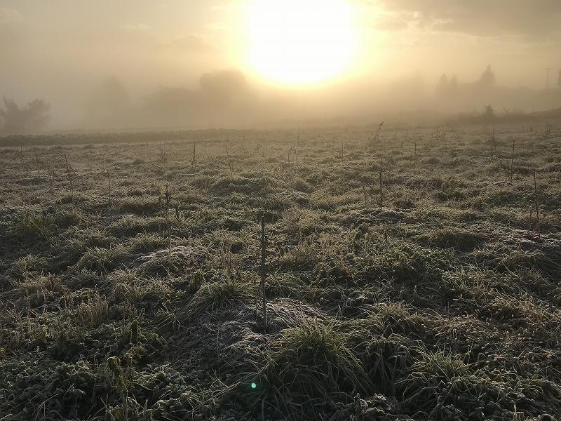 霧と霜と朝日のブルーベリー畑